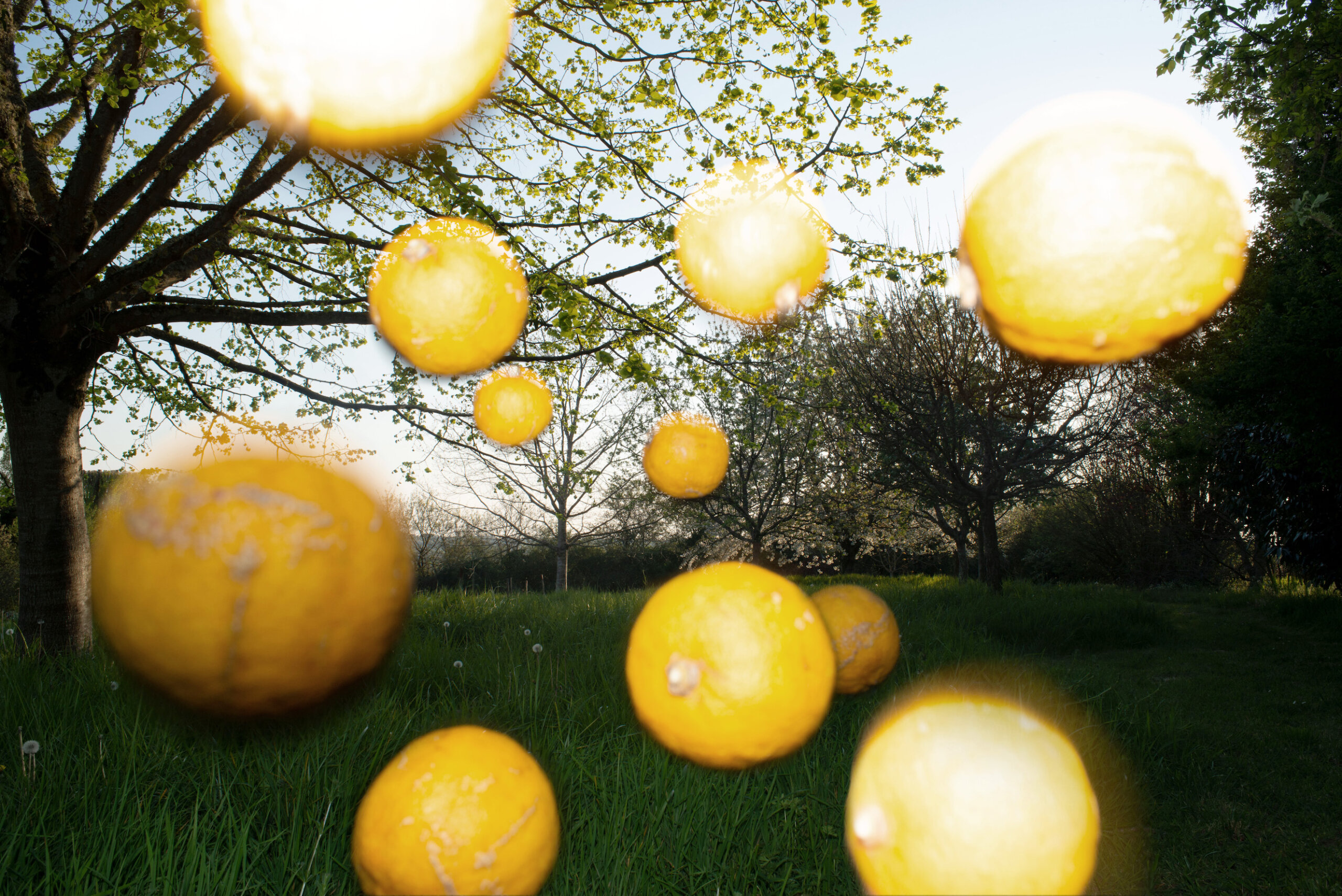 estelle-hanania-les-citrons-delpire-co